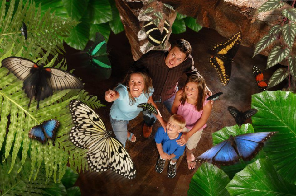 Family at Butterfly Palace and Rainforest Adventure in Branson, Missouri, USA