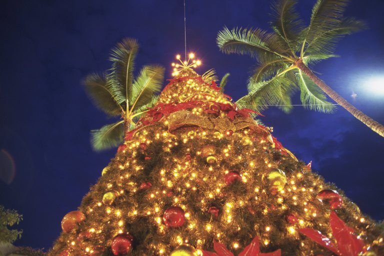 ground view of Christmas tree looking up at Palm trees in Hawaii