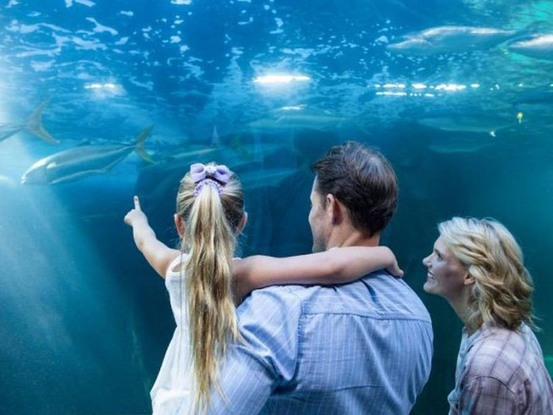 Educational Things to Do in San Diego: 8 Places Kids Love