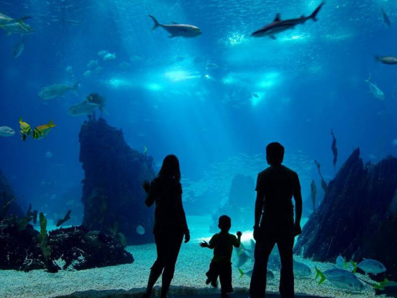 The 8 Best Aquariums in the U.S. Everyone Should See
