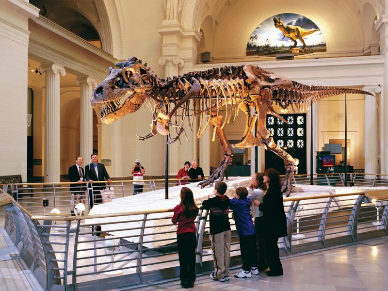 The 8 Best Chicago Museums You Can't Miss