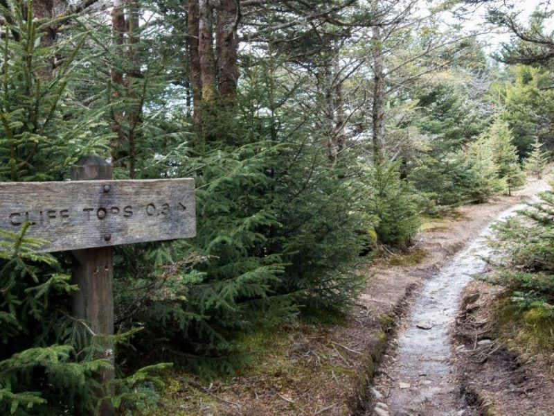 How to Conquer the Alum Cave to Mt. LeConte Trail