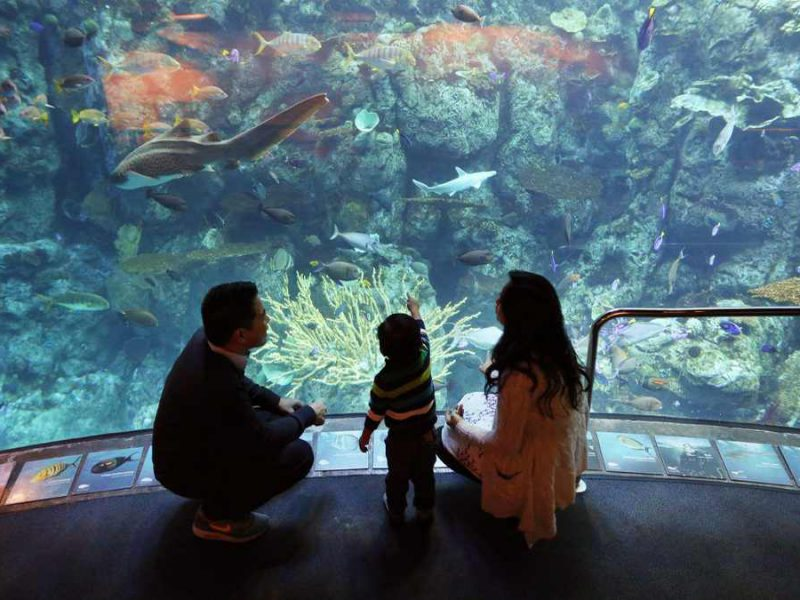 Aquarium of the Pacific Tickets: All You Need to Know