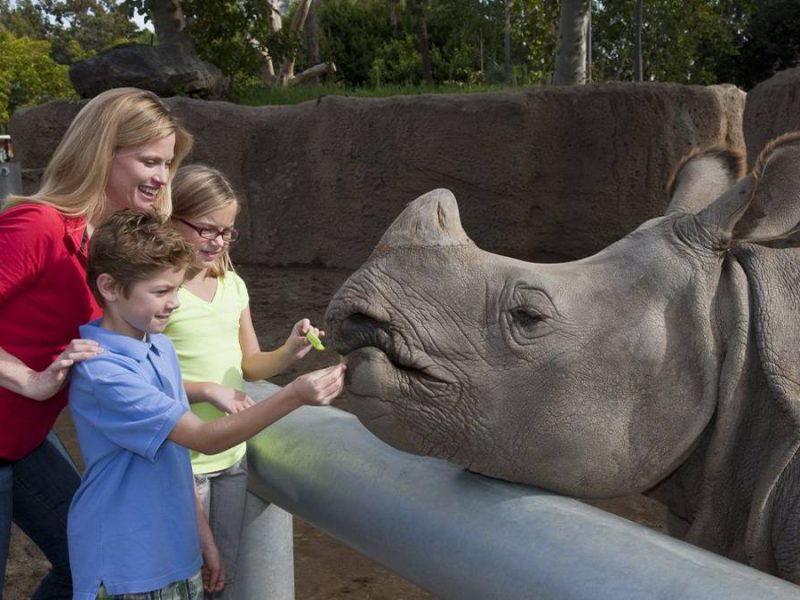 The Ultimate San Diego Family Vacation Itinerary: 9 Destinations You Can't Miss