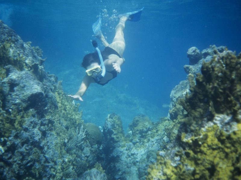 The Best Snorkeling in Oahu: Your North Shore Guide